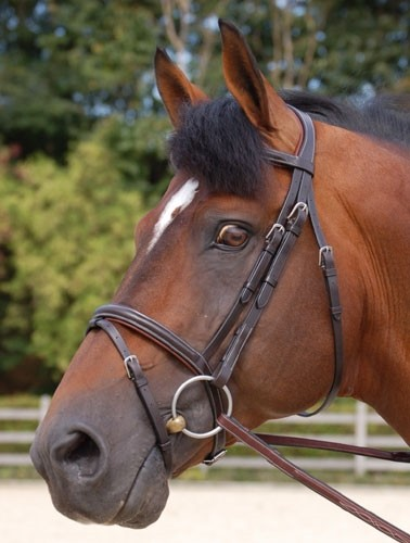Dyon - Working bridle med kombinerad nosgrimma S/S